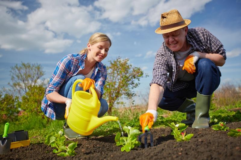 Хитрая посадка моркови: семена, бутылка — и корнеплоды даже прореживать не нужно. Минимум возни, отличный урожай