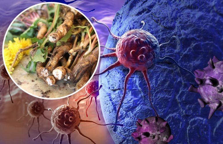 Марихуана убивает клетки рака какая польза конопли