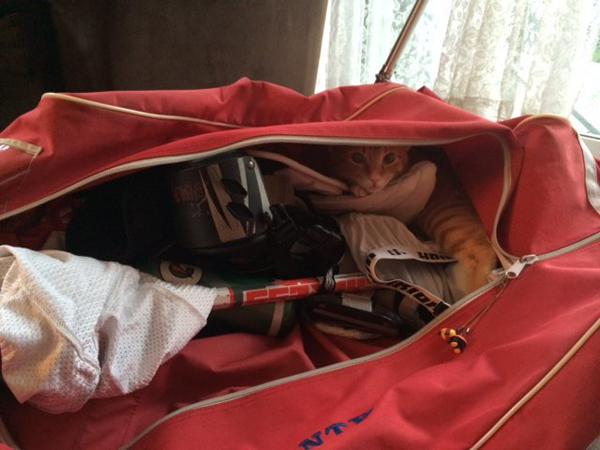 Для чего сгодятся загадочные мешочки из коробок с обувью