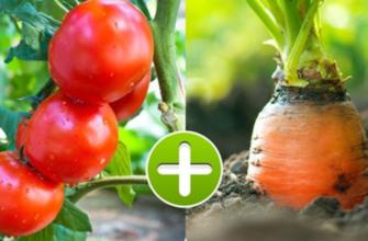 Растения-компаньоны на одной грядке + таблица совместимости овощей
