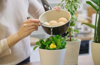 Чем подкормить комнатные цветы: 7 натуральных удобрений с кухни