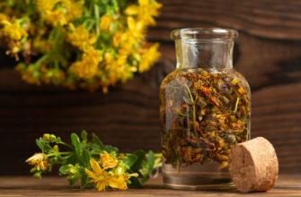 Лекарства из трав: какие бывают и как их готовить