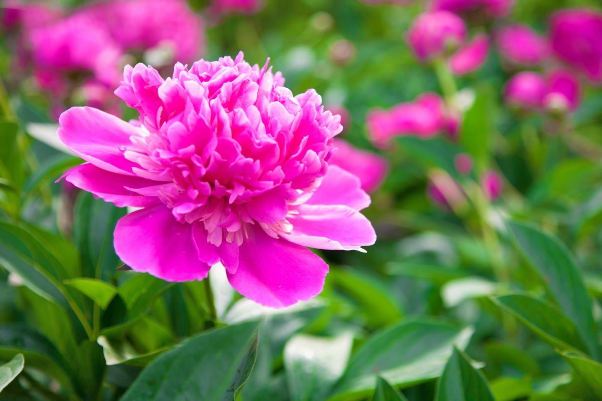 Какие цветы вытесняют сорняки на клумбе без остатка