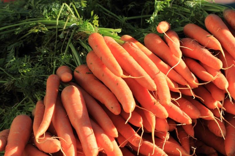 Успешная посадка моркови с помощью бутылки