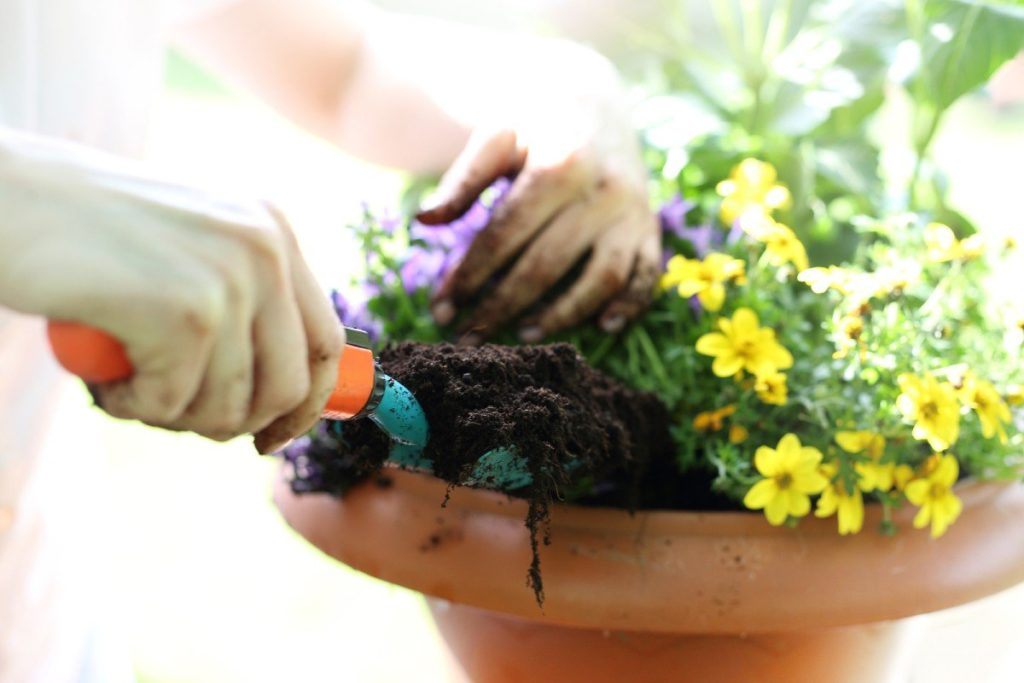 Дрожжи в комнатном цветоводстве и как удобрять растения на совесть