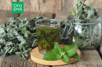 Чай из листьев: какие растения можно и нужно заваривать