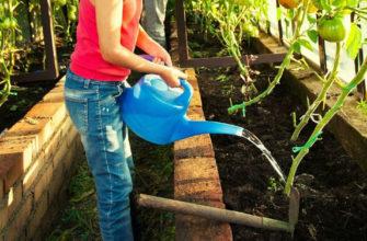 Как прозорливые дачники используют нашатырный спирт в огороде