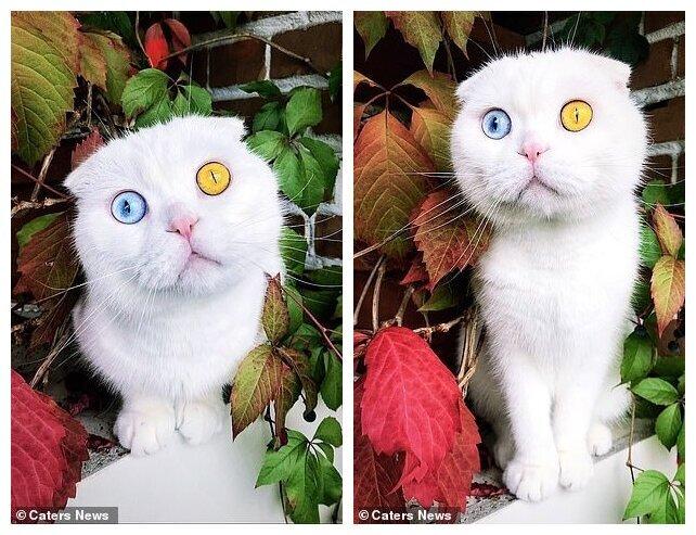 В Петербурге белоснежный кот с разноцветными глазами наконец нашел хозяина