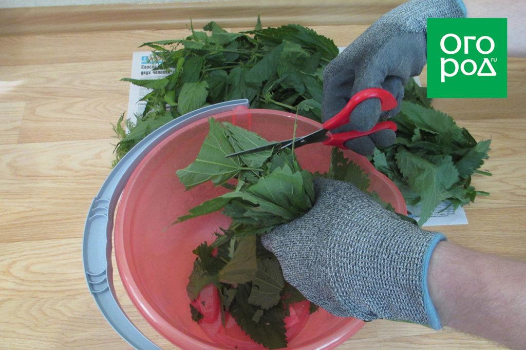 Настой из крапивы – пошаговый мастер-класс с фото и секретами приготовления
