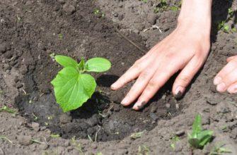 Как правильно поливать огурцы для хорошего урожая