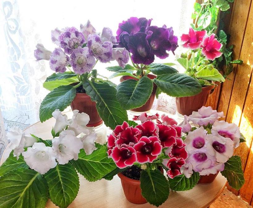 Какие цветы нужны для счастья разным знакам зодиака