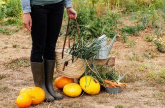8 непростительных ошибок, которые вы совершаете каждую осень
