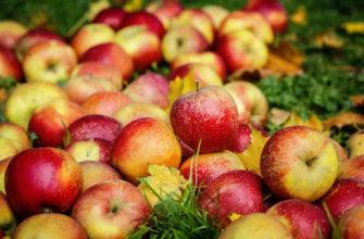 Самые сладкие сорта яблок. Описание, фото.