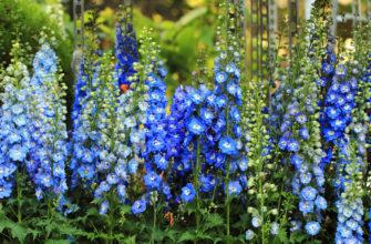 Они не заставят долго ждать: цветы, которые помогут быстро озеленить участок