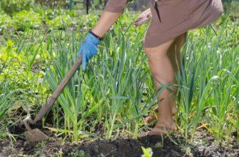 Школа Огорода: главное о сорняках – виды, вред и как бороться