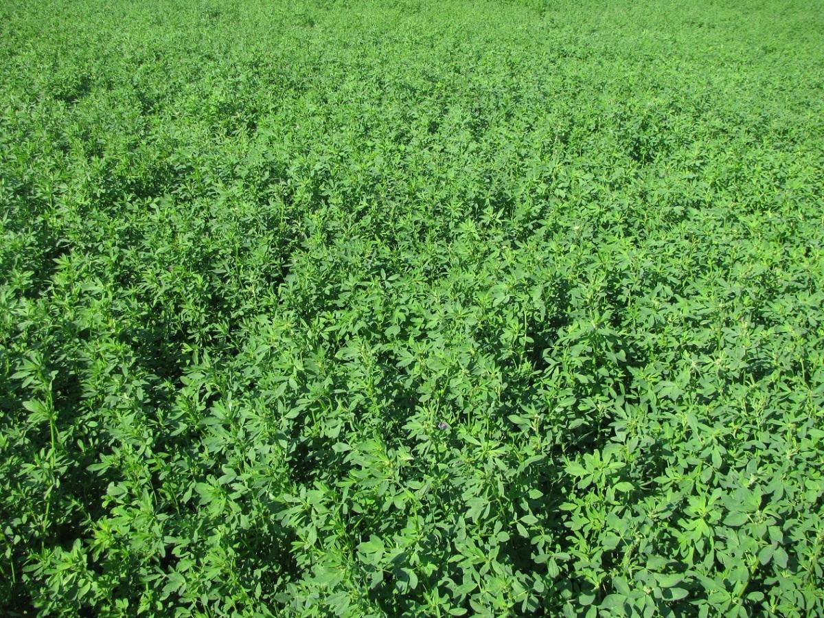 Осенние подкормки - удобрение и улучшение почвы