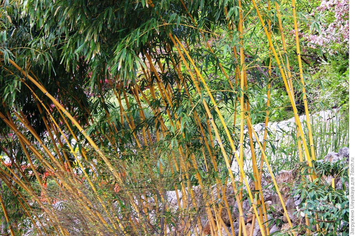 Самые шустрые! Деревья и кустарники, с помощью которых можно быстро озеленить участок.