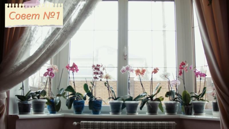 Ваша любимая орхидея будет цвести весь год! 7 важных советов.