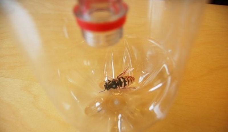 Зачем втыкать пластиковые бутылки по грядкам