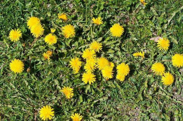 О чем говорят сорняки? Определяем особенности почвы по растениям.