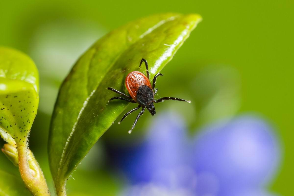 Бабушкин способ не пускать насекомых в дом при открытых настежь окнах