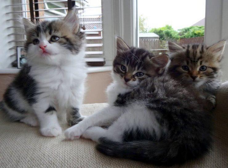 Жалостливый человек впустил к себе кошку, даже не подозревая, к чему это приведет (10 фото)