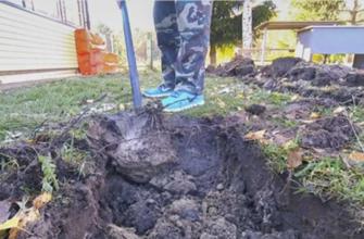 Какие деревья посадить, чтобы реже откачивать выгребную яму на участке