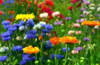 Календарь цветения многолетников по месяцам с весны до осени