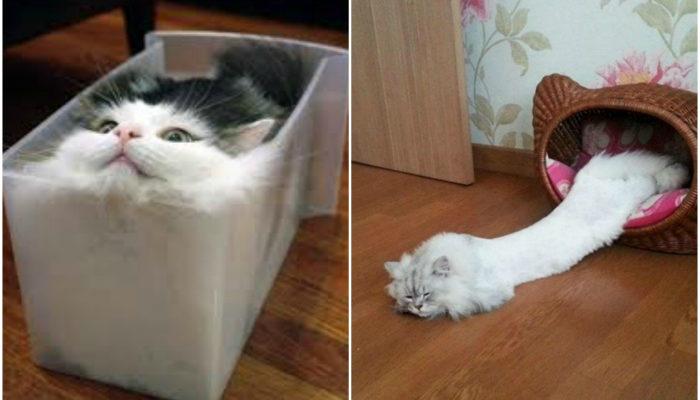 Правдивые снимки, доказывающие, что коты - исключительная субстанция
