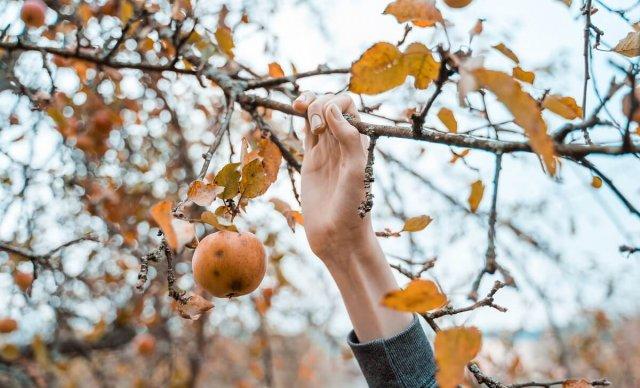 Влагозарядный полив осенью: нормы воды для деревьев и кустарников