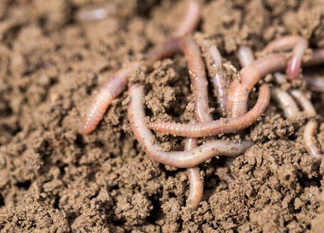 6 экологически безопасных способов повысить плодородие почвы