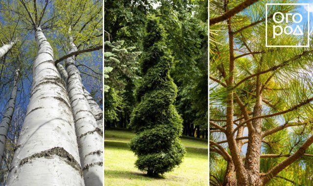 Какие растения подобрать для маленького участка (6 соток и меньше)