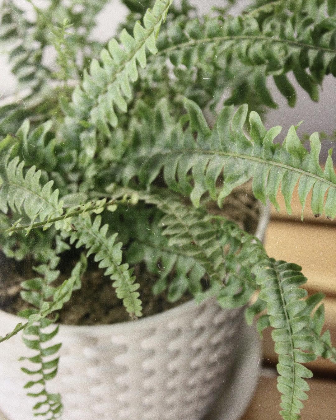 По вине каких растений деньги утекают из дома рекой