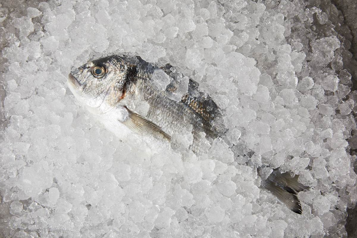 Супербыстрая разморозка мяса и рыбы