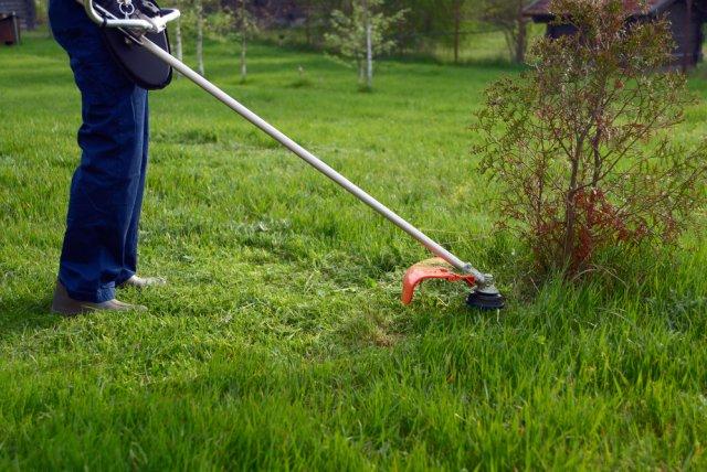 15 шагов к здоровому саду – несложные правила, которые помогут сохранить урожай