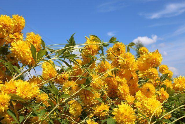 13 восхитительных растений, цветущих в сентябре