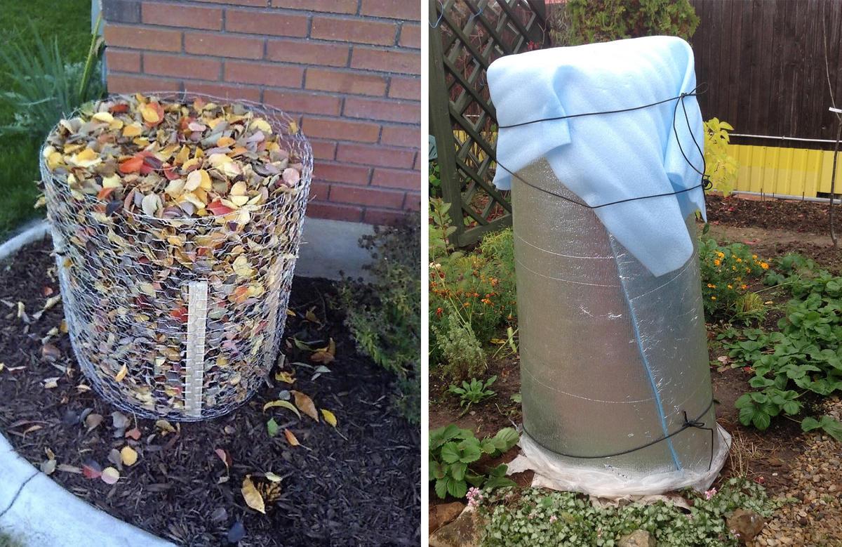 Как укрыть гортензию на зиму: популярные способы