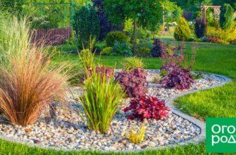 Растения для маленького сада – 9 многолетников, которым не нужно много места