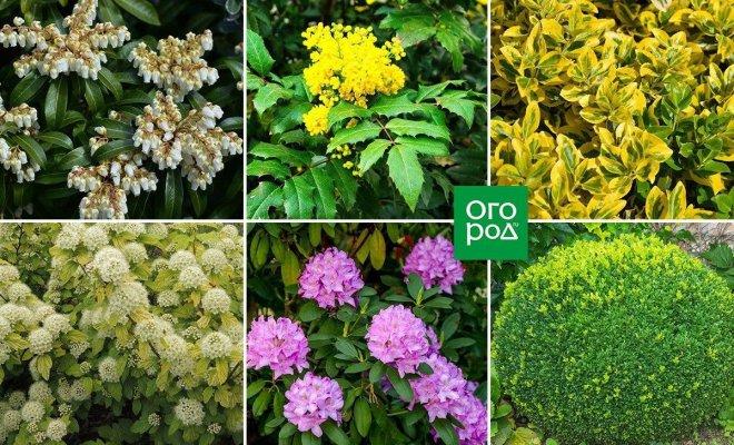 7 кустарников, которые можно высаживать под деревьями