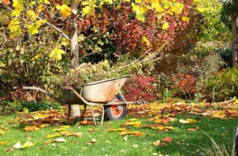 Как подготовить сад к зиме