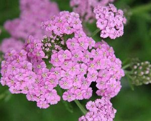 Клумба на солнцепеке: какие цветы смогут расти на сухом и солнечном участке