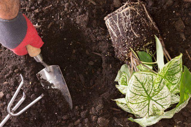 15 самых частых ошибок при посадке декоративных растений