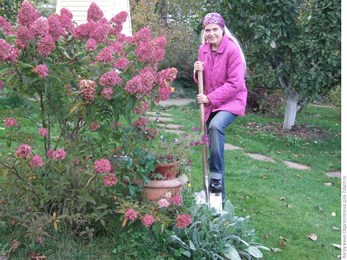 Посадка и пересадка растений осенью: сроки, рекомендации и секреты