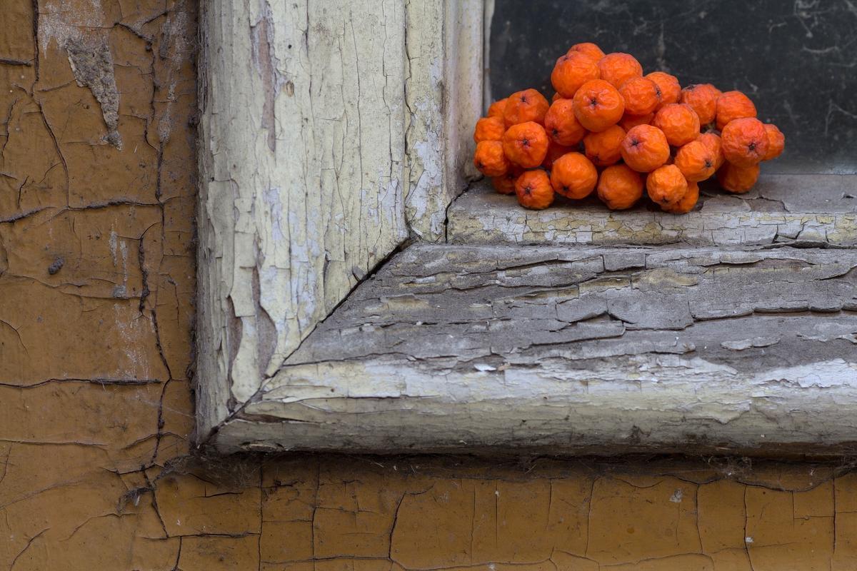 Рябина в саду, в поэзии и обычаях