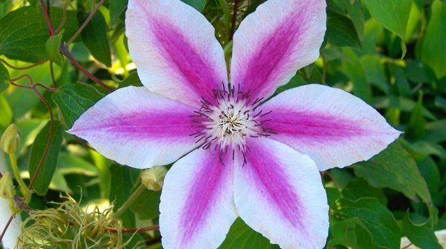 Многолетние цветы, которые не надо выкапывать на зиму