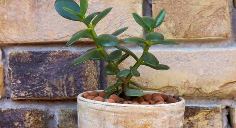 Где поставить денежное дерево, чтобы деньги полились в дом рекой
