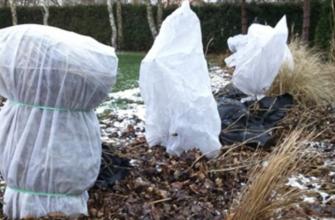 Укрытие растений на зиму – развенчиваем мифы
