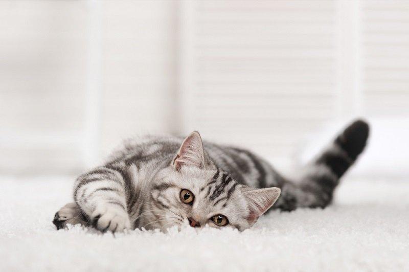Если кошка любит спать в хозяйской постели, что это значит?