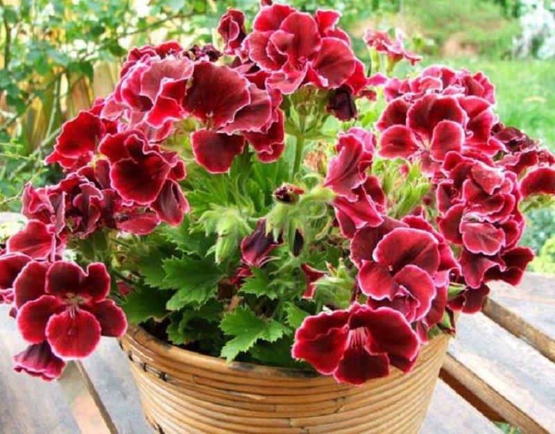 Какие растения вытягивают из тебя силы