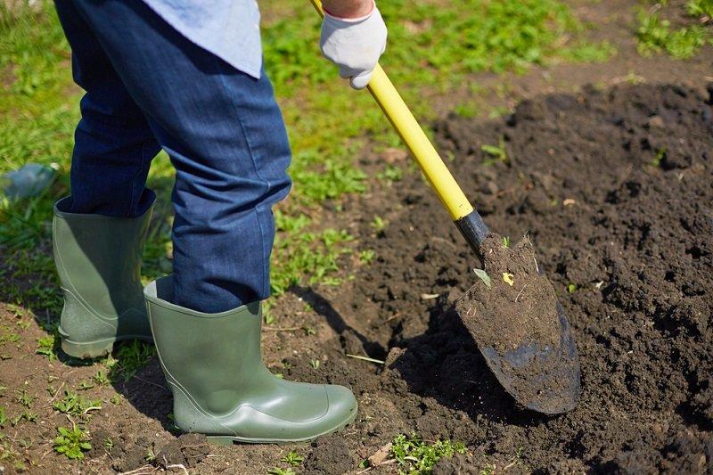 Зачем бабушке копаться в огороде